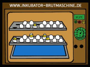 Brutmaschine für Hühnereier
