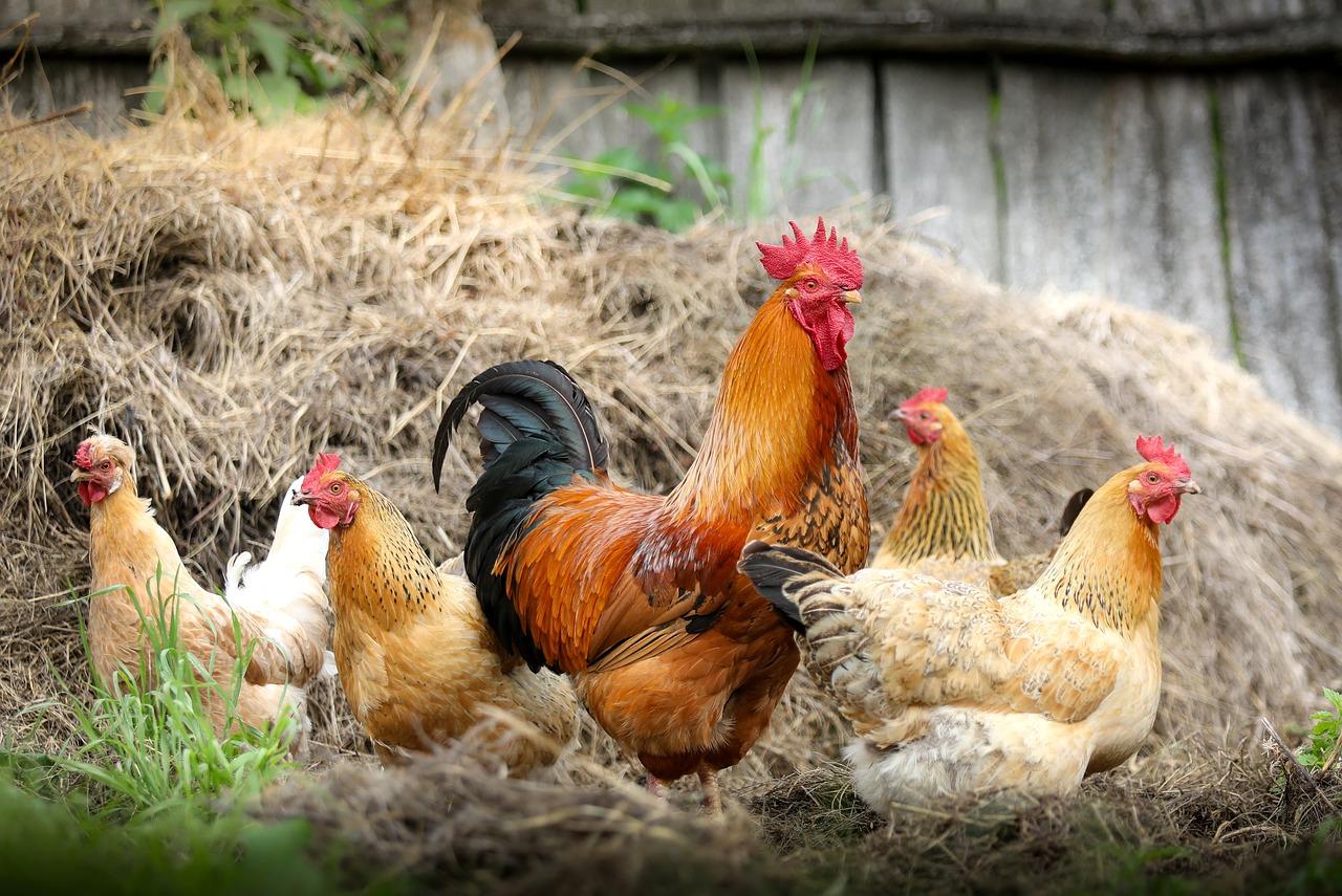 Hier findet man befruchtete Eier